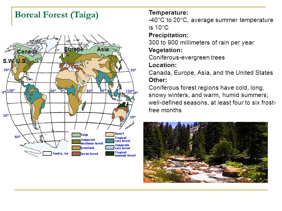Boreal Forest (Taiga) Temperature:
