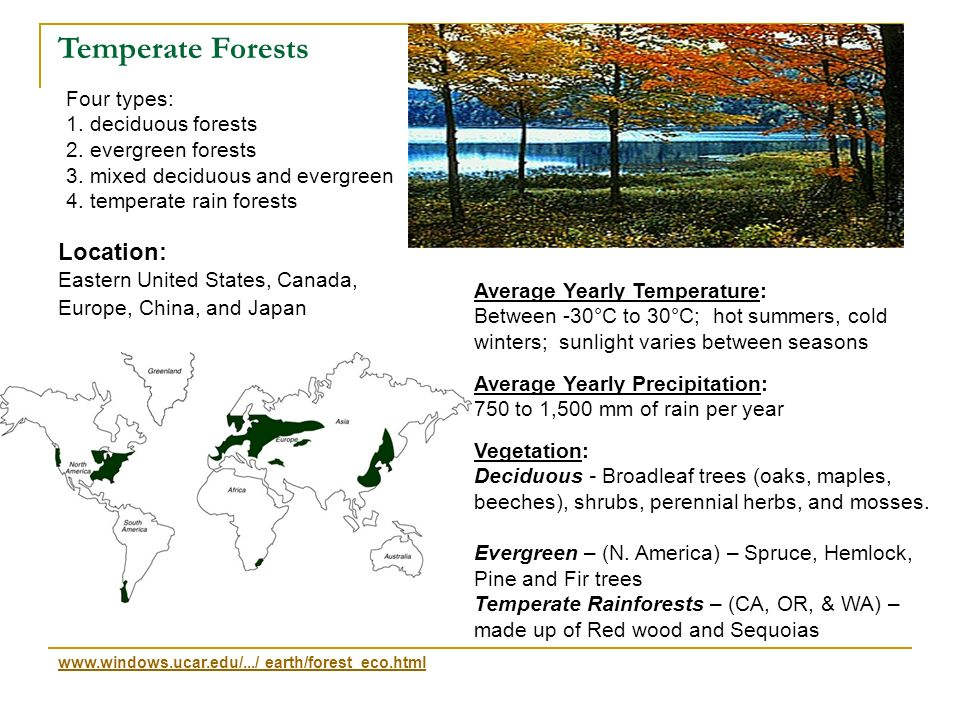 Temperate Forests Location: Four types: 1. deciduous forests