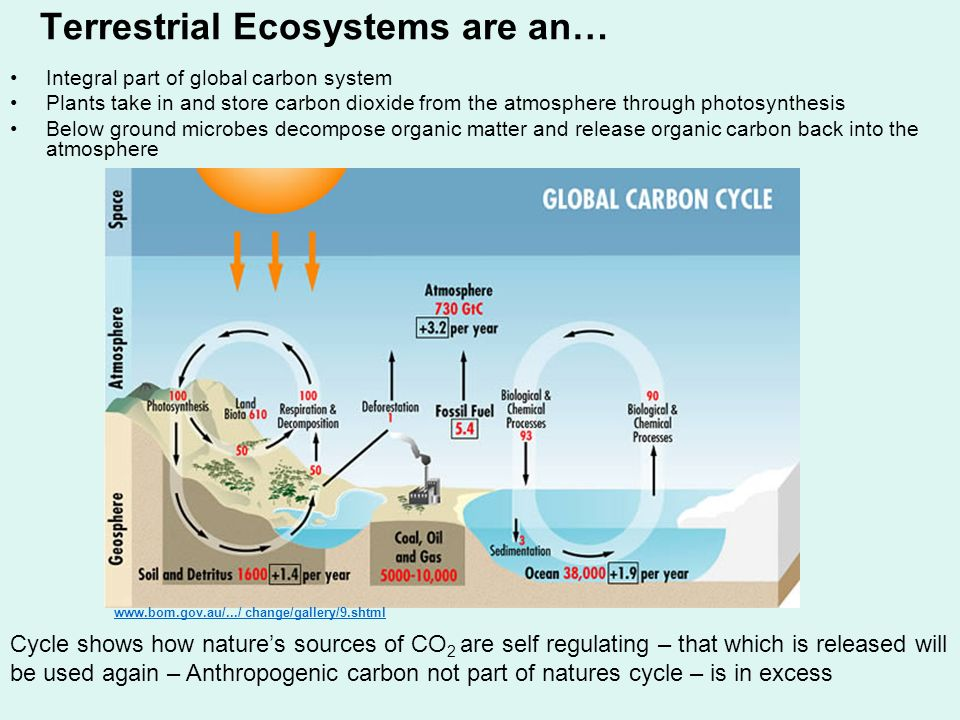 Terrestrial Ecosystems are an…