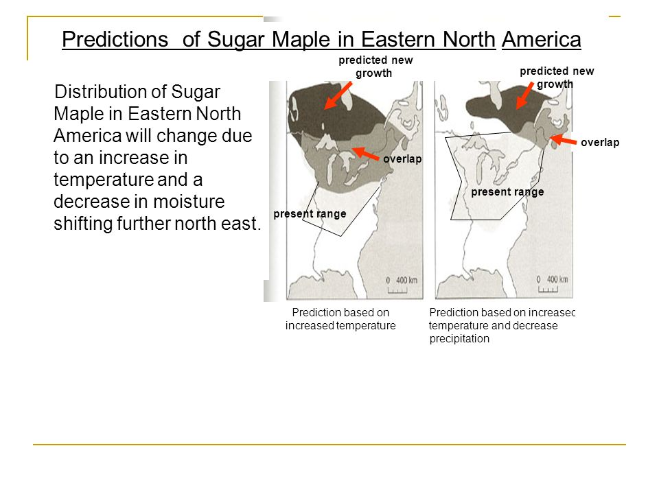 Predictions of Sugar Maple in Eastern North America