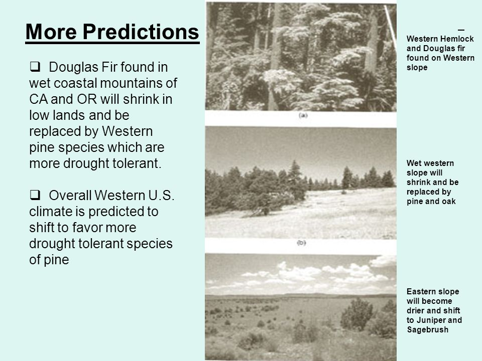 More Predictions Western Hemlock and Douglas fir found on Western slope.