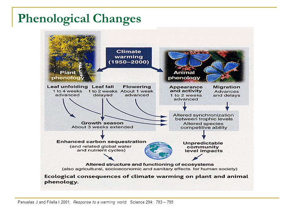 Phenological Changes Penuelas J and Filella I 2001.