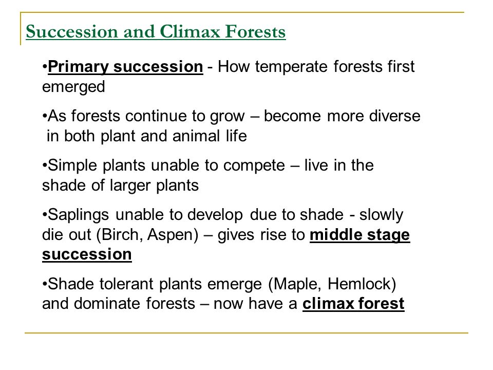 Succession and Climax Forests