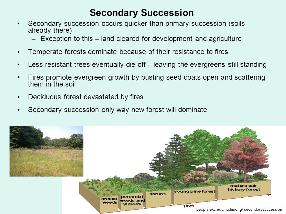 Secondary Succession Secondary succession occurs quicker than primary succession (soils already there)