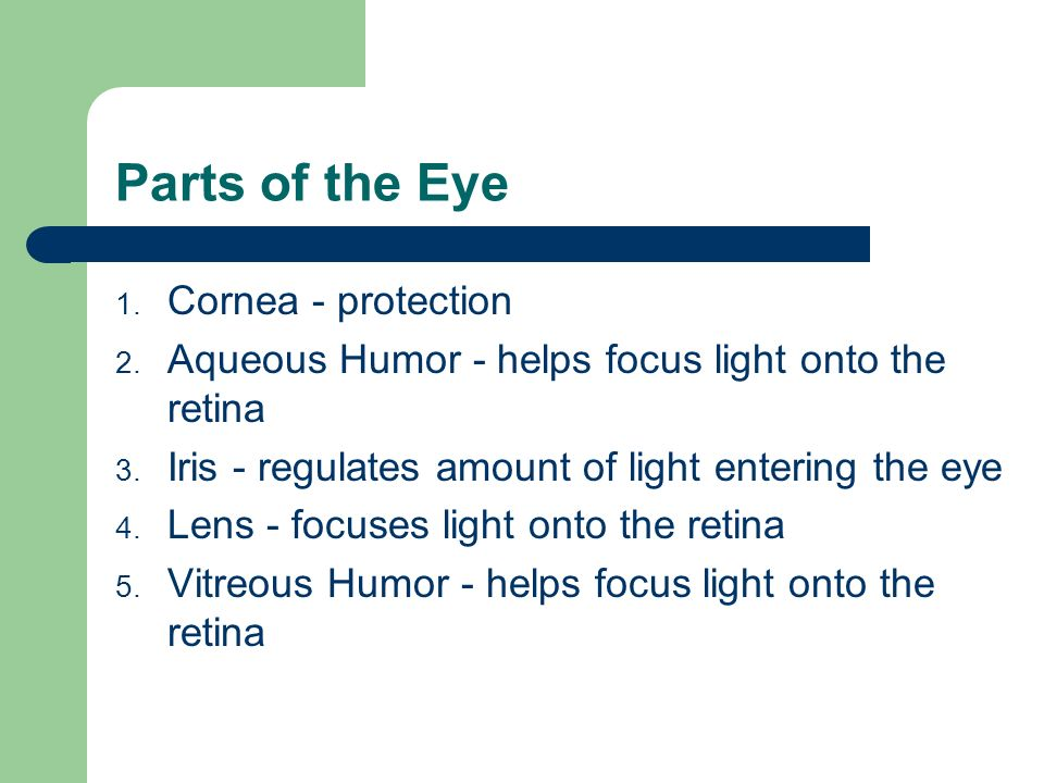 Parts of the Eye Cornea - protection