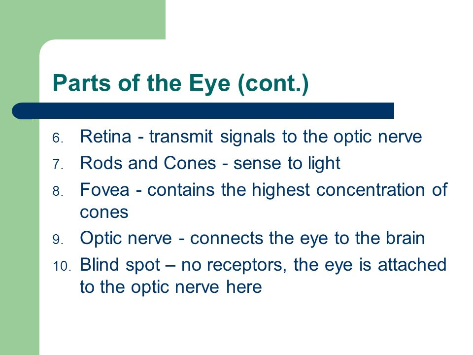 Parts of the Eye (cont.) Retina - transmit signals to the optic nerve