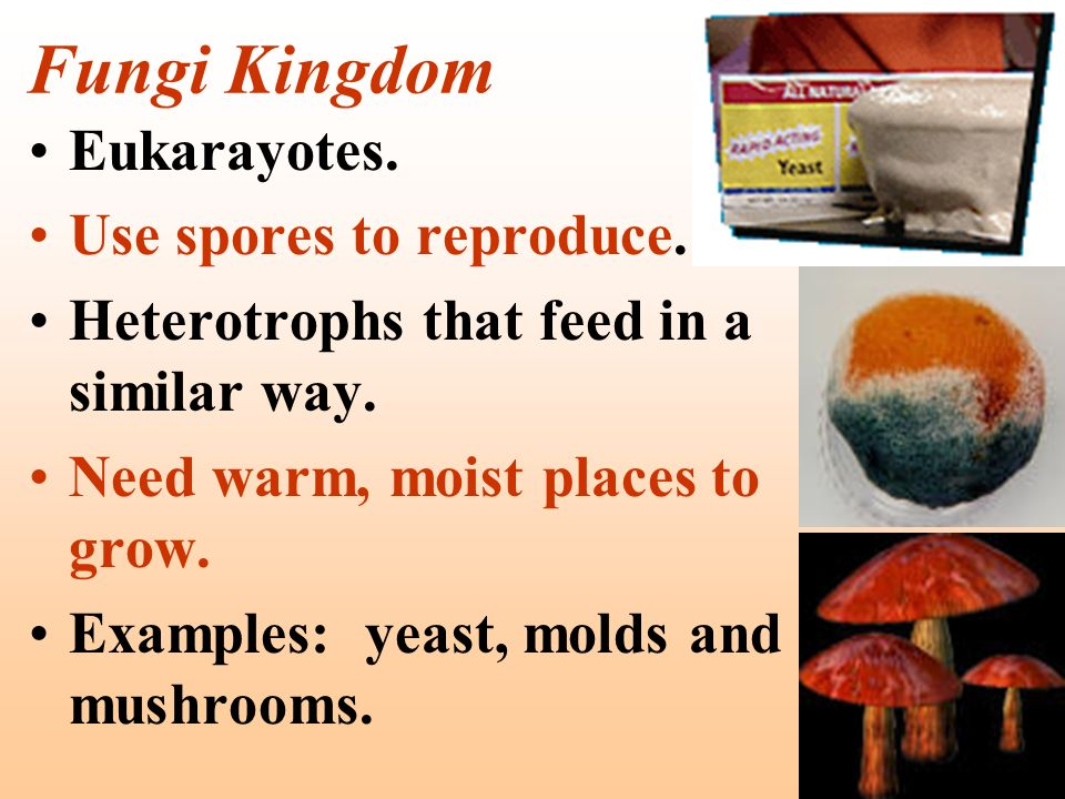 Fungi Kingdom Eukarayotes. Use spores to reproduce.