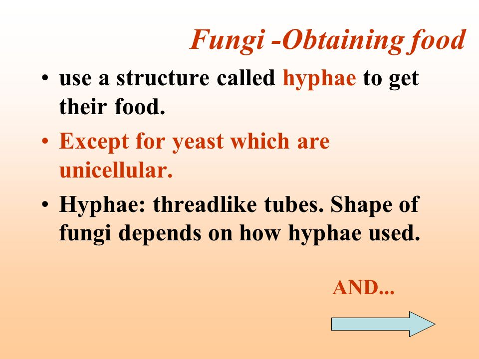 Fungi -Obtaining food use a structure called hyphae to get their food.