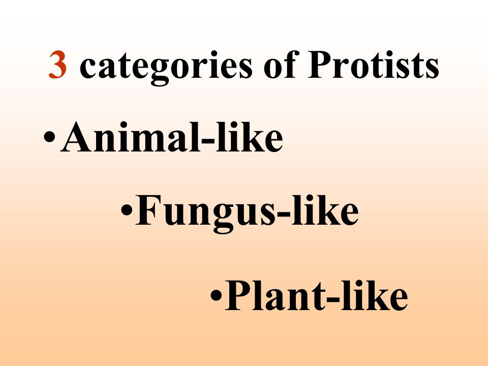 3 categories of Protists