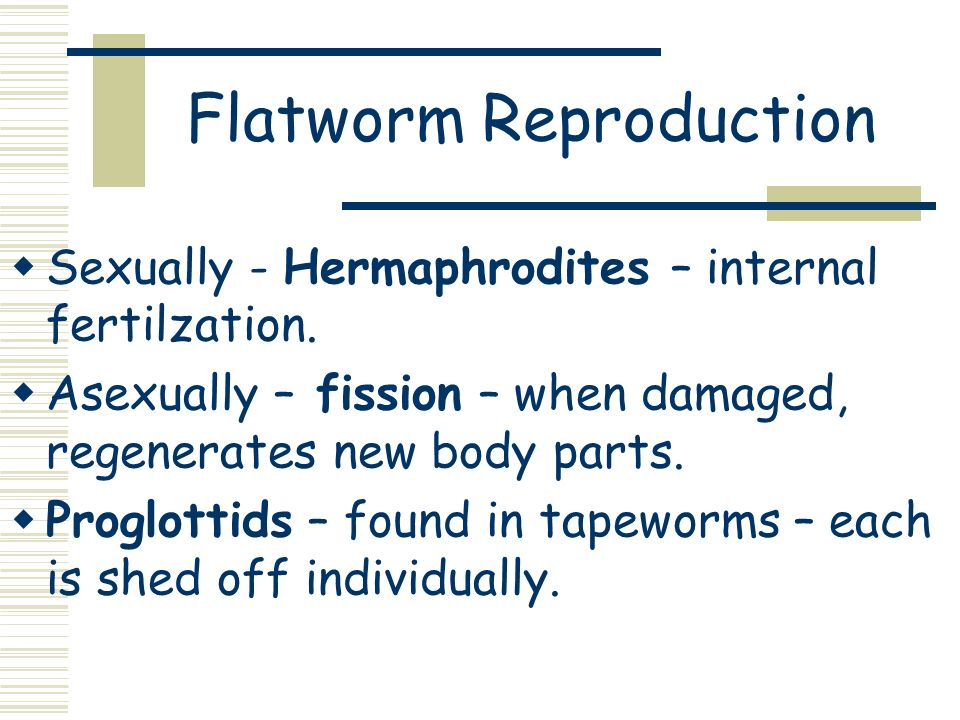 Flatworm Reproduction