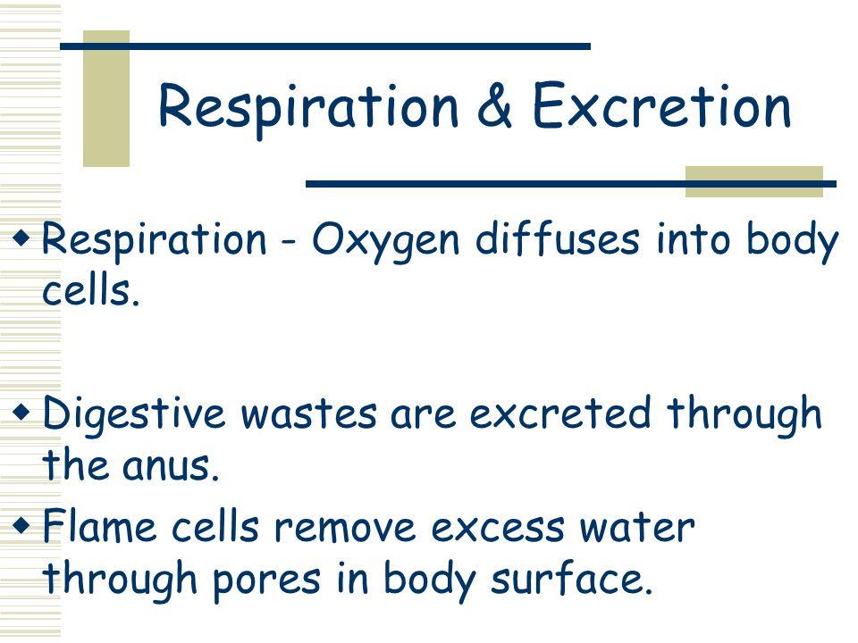 Respiration & Excretion