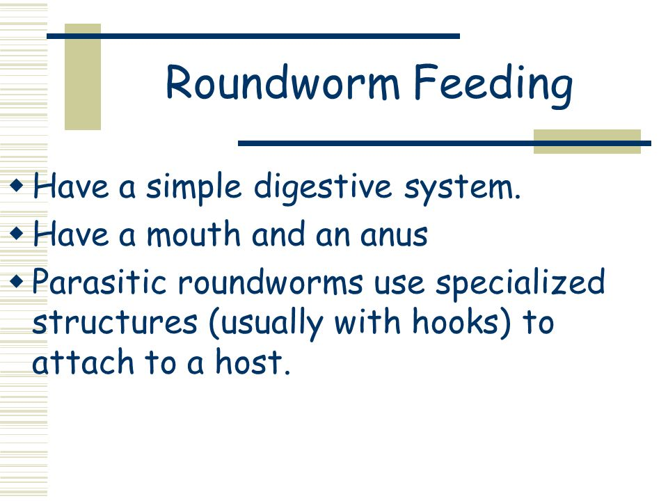 Roundworm Feeding Have a simple digestive system.
