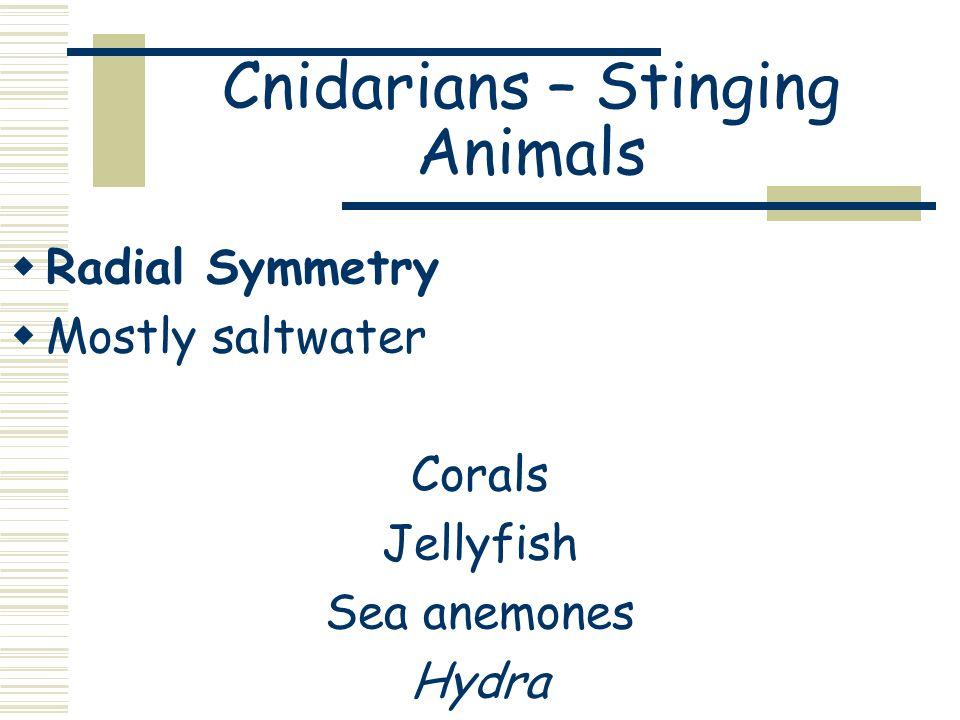 Cnidarians – Stinging Animals