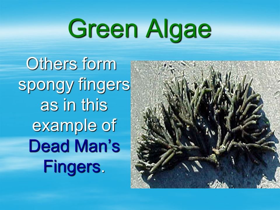 Others form spongy fingers as in this example of Dead Man's Fingers.