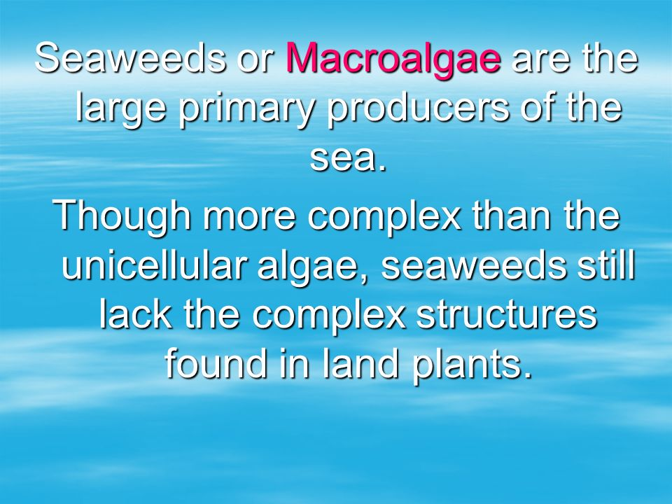 Seaweeds or Macroalgae are the large primary producers of the sea.