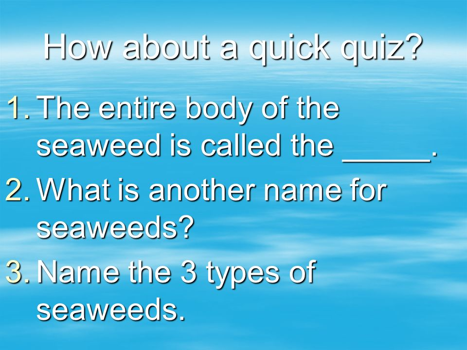 How about a quick quiz The entire body of the seaweed is called the _____. What is another name for seaweeds