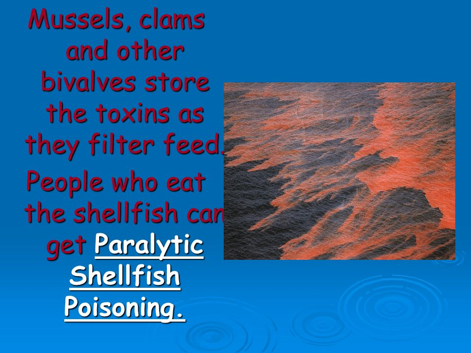 People who eat the shellfish can get Paralytic Shellfish Poisoning.