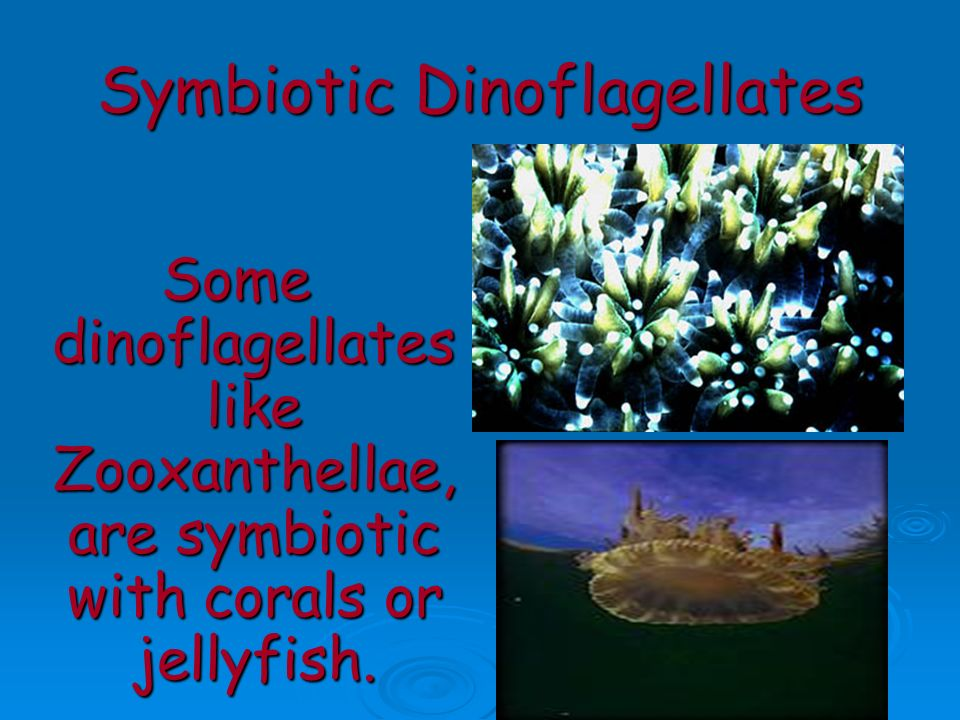 Symbiotic Dinoflagellates