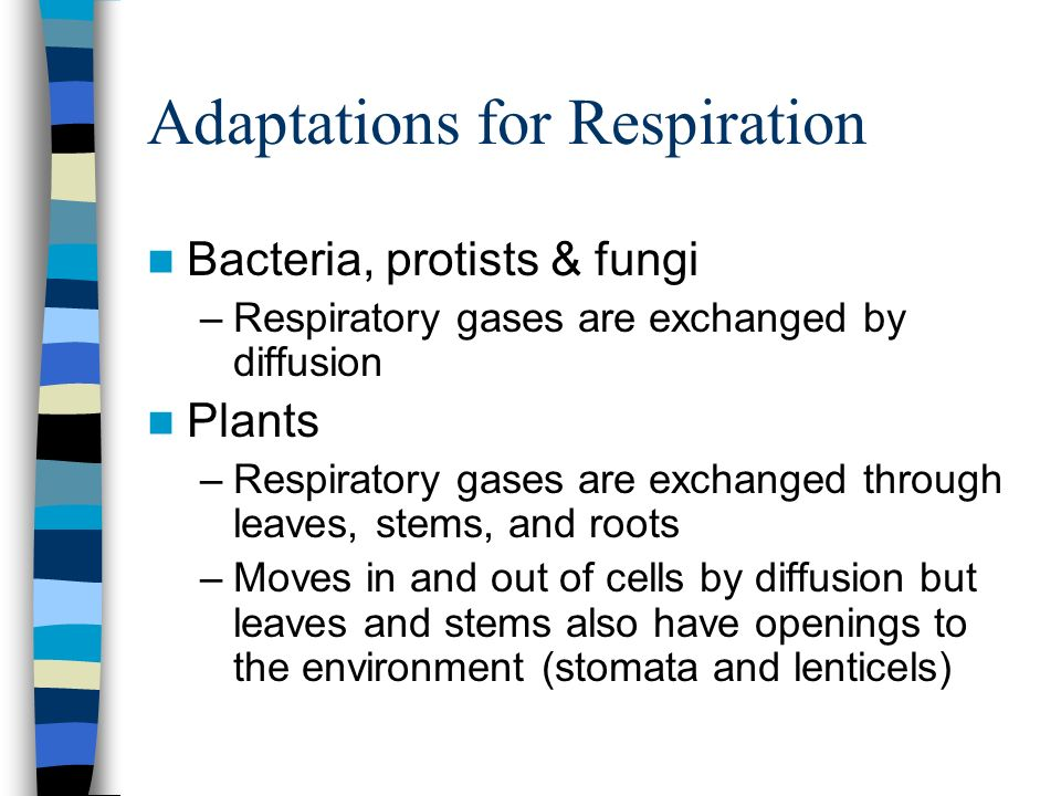 Adaptations for Respiration