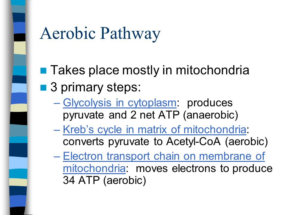 Aerobic Pathway Takes place mostly in mitochondria 3 primary steps: