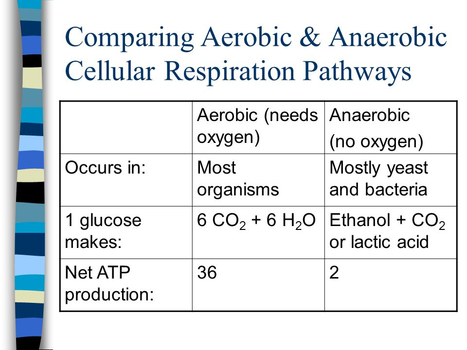 Comparing Aerobic & Anaerobic Cellular Respiration Pathways