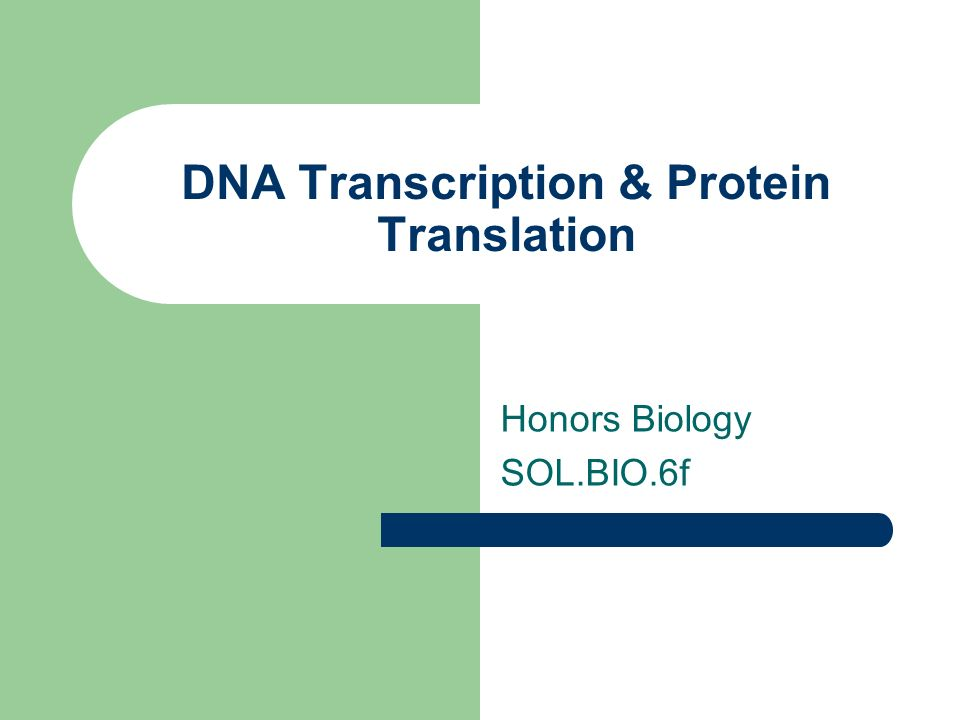 DNA Transcription & Protein Translation