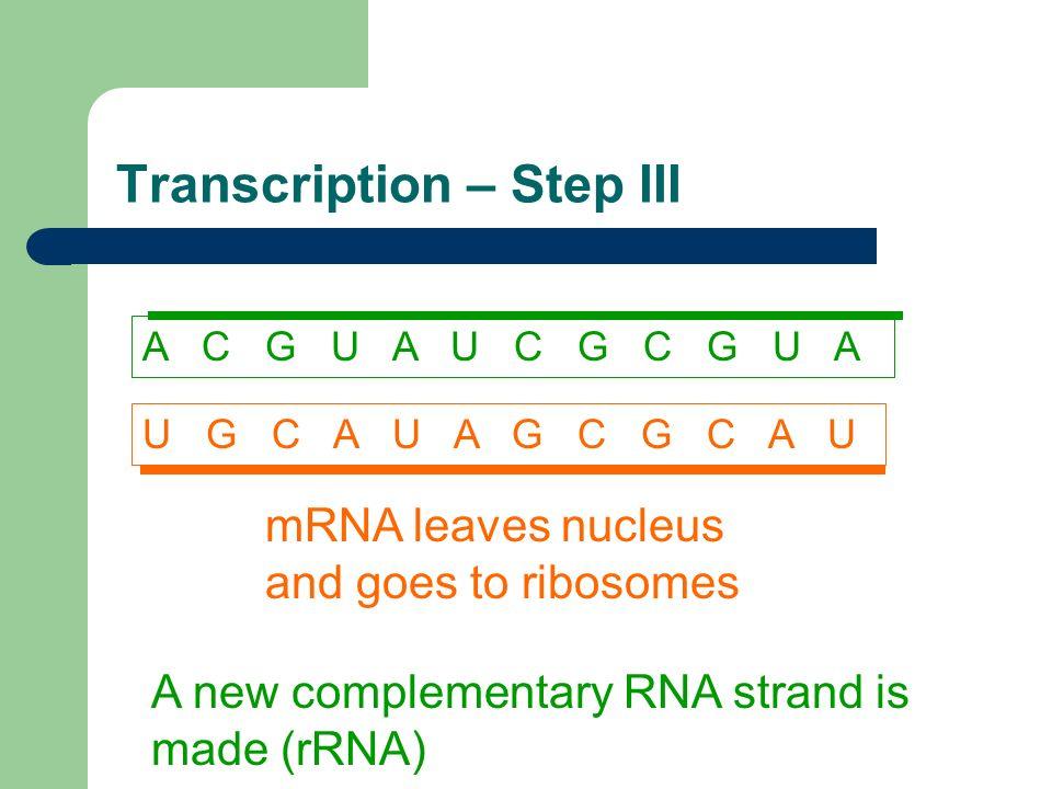 Transcription – Step III