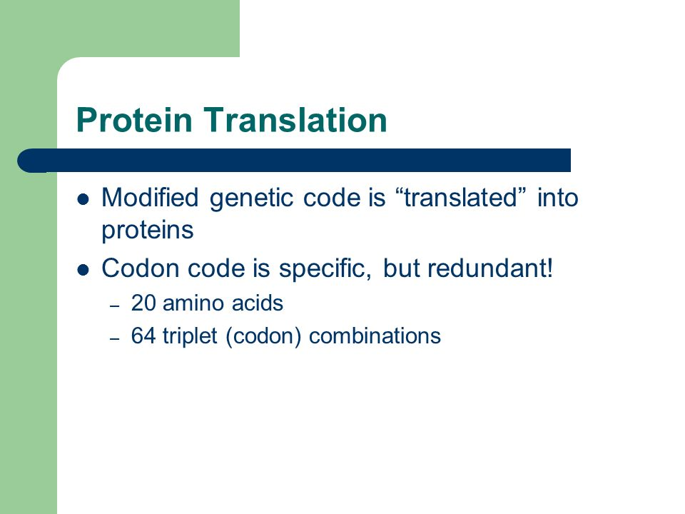 Protein Translation Modified genetic code is translated into proteins. Codon code is specific, but redundant!