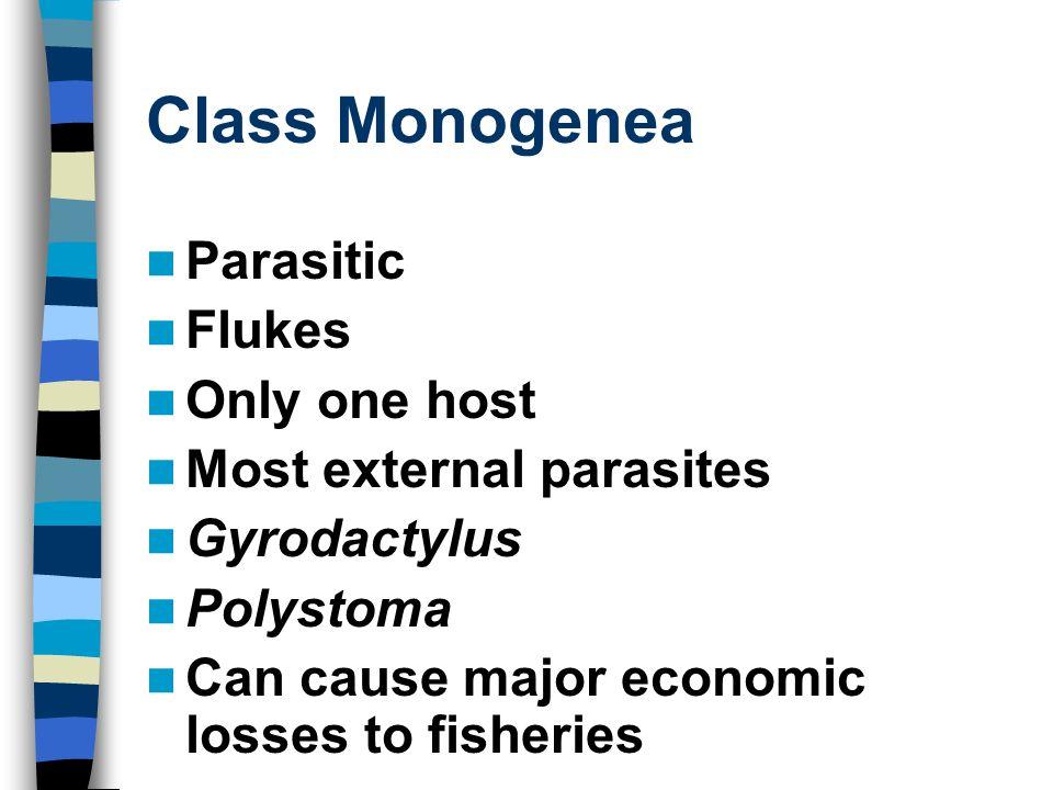 Class Monogenea Parasitic Flukes Only one host Most external parasites
