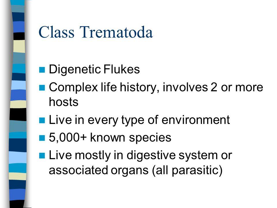 Class Trematoda Digenetic Flukes
