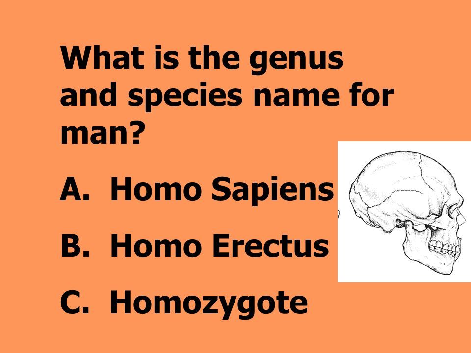 What is the genus and species name for man