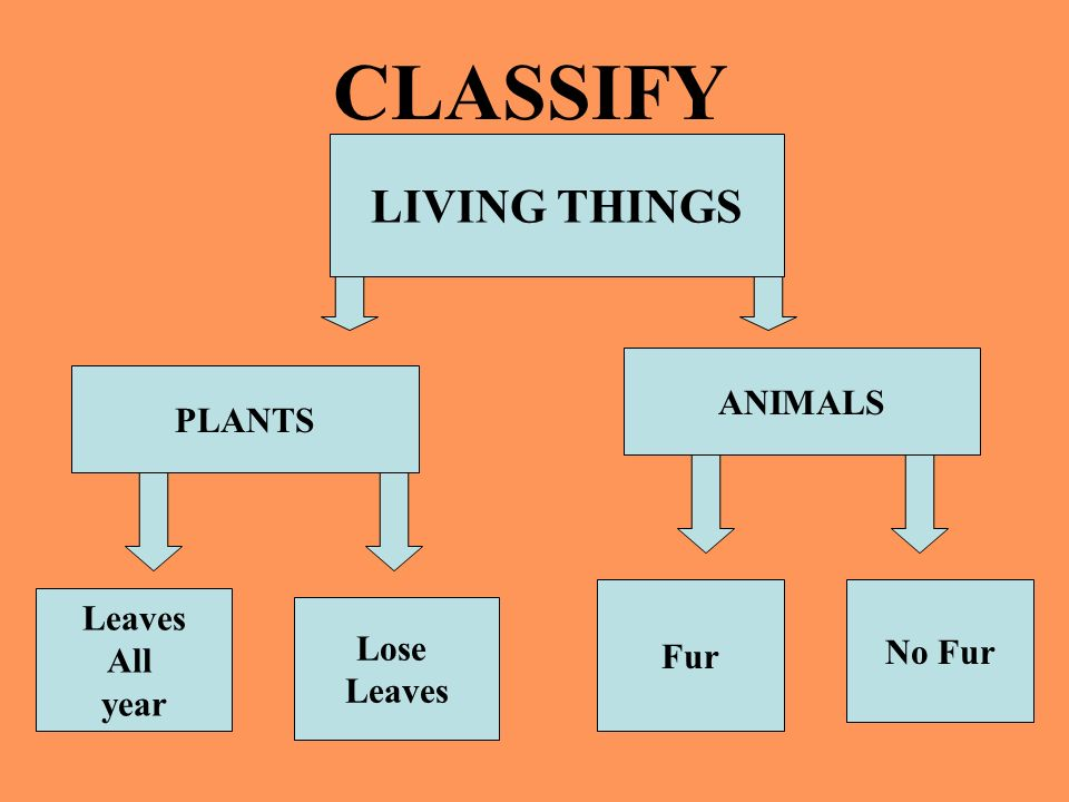 CLASSIFY LIVING THINGS ANIMALS PLANTS Leaves Fur No Fur All Lose year