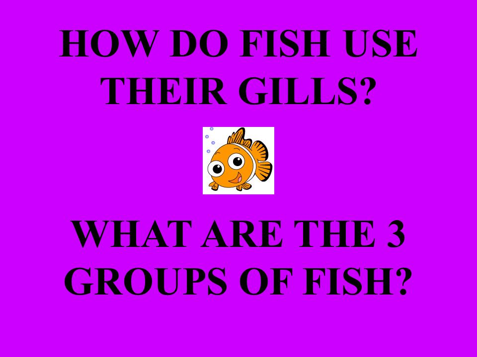 HOW DO FISH USE THEIR GILLS WHAT ARE THE 3 GROUPS OF FISH