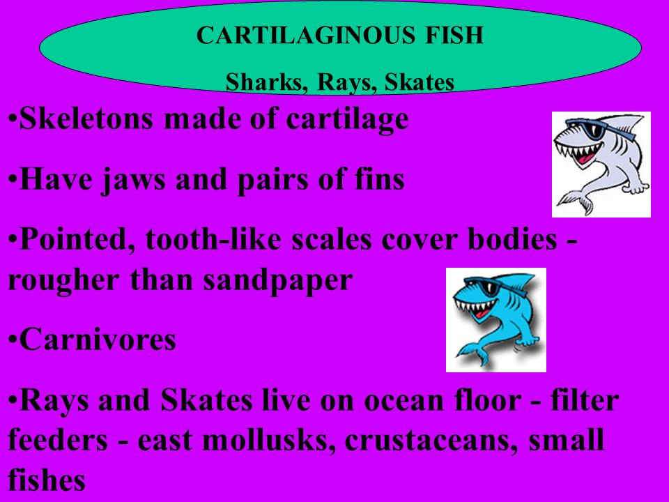 Skeletons made of cartilage Have jaws and pairs of fins