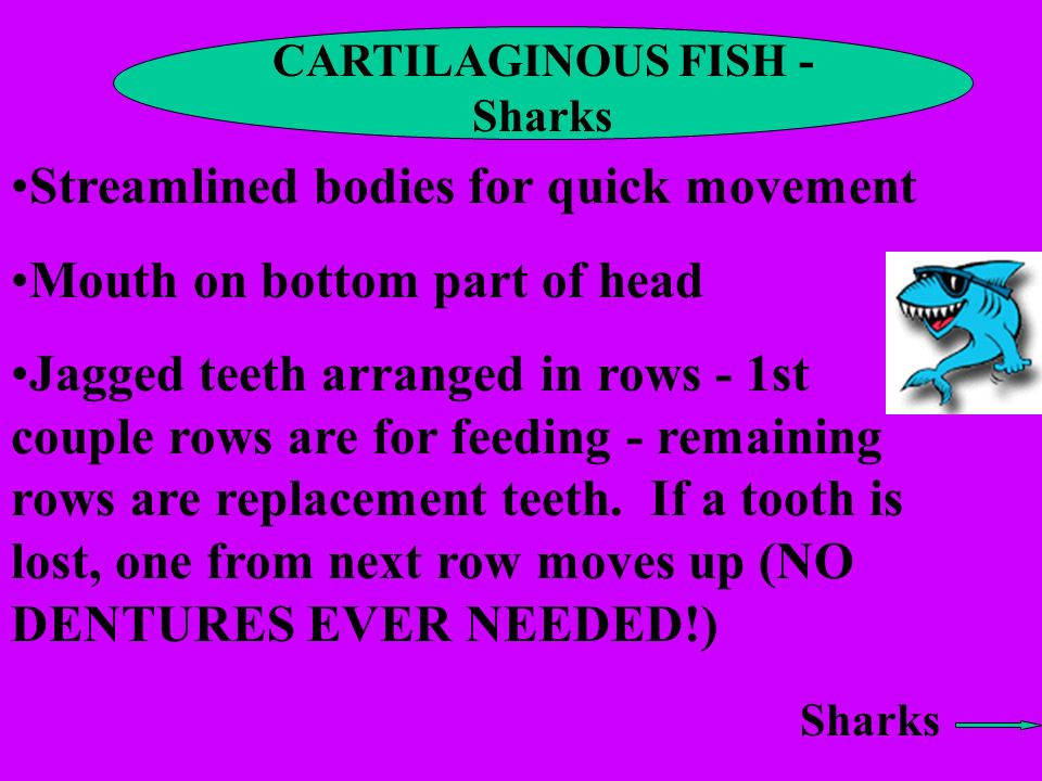 CARTILAGINOUS FISH - Sharks