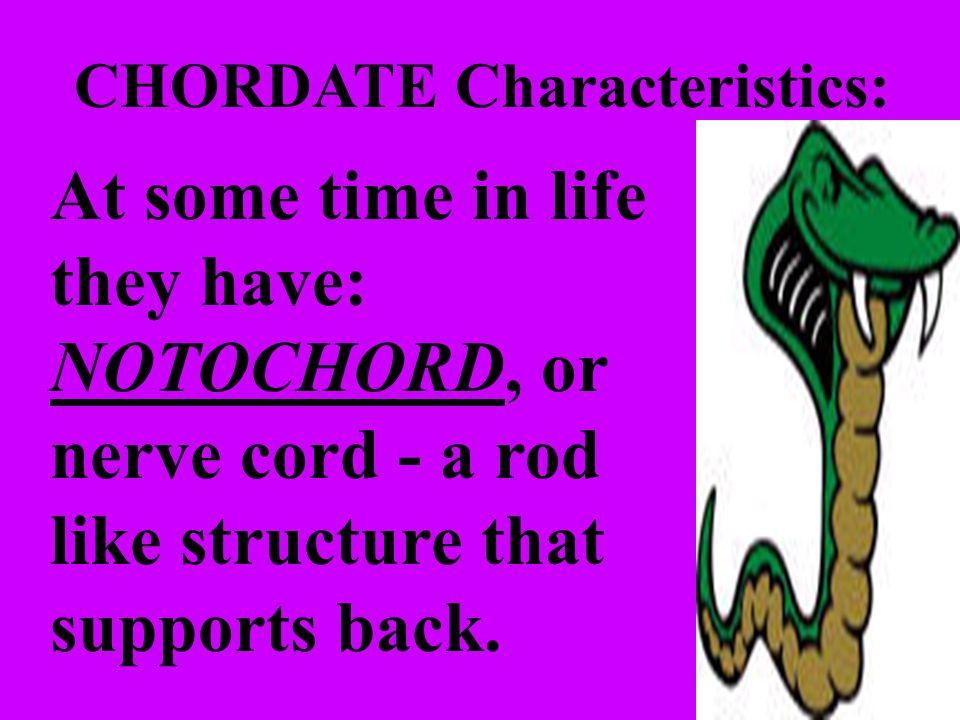 CHORDATE Characteristics: