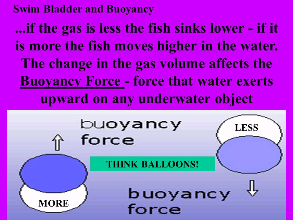 Swim Bladder and Buoyancy