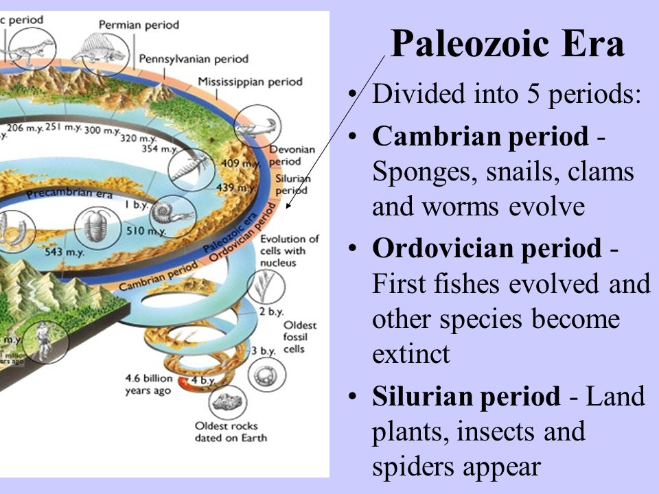 Paleozoic Era Divided into 5 periods: