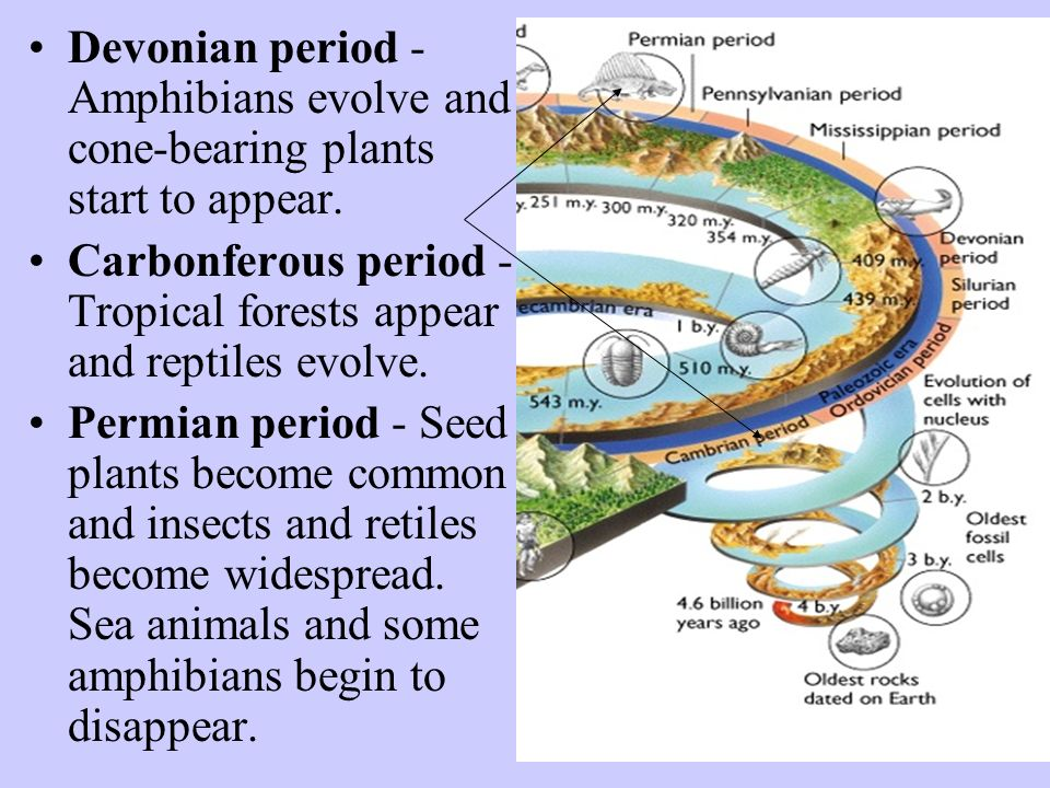 Devonian period - Amphibians evolve and cone-bearing plants start to appear.