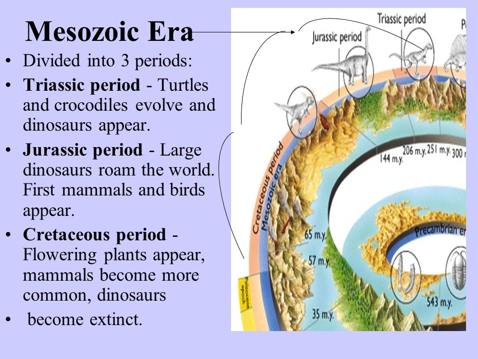 Mesozoic Era Divided into 3 periods: