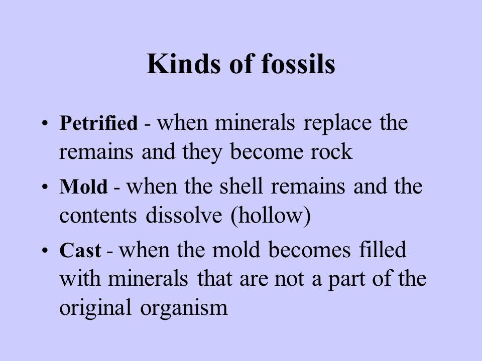 Kinds of fossils Petrified - when minerals replace the remains and they become rock.