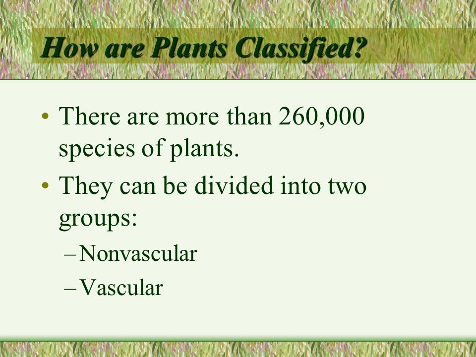 How are Plants Classified