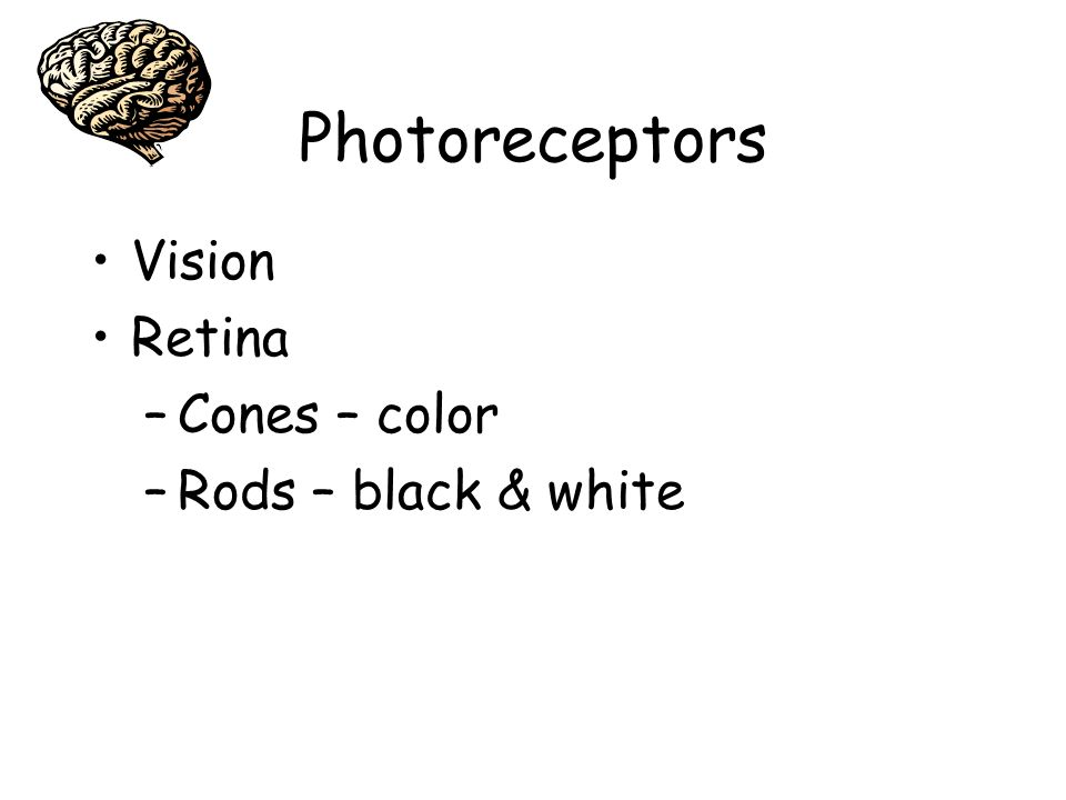 Photoreceptors Vision Retina Cones – color Rods – black & white
