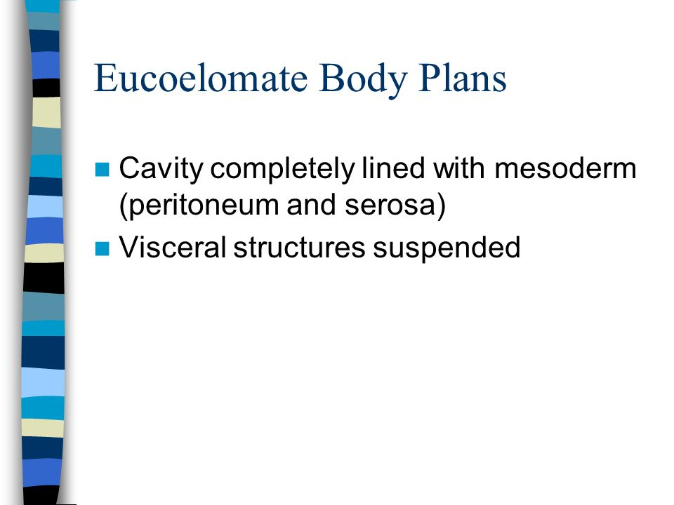 Eucoelomate Body Plans