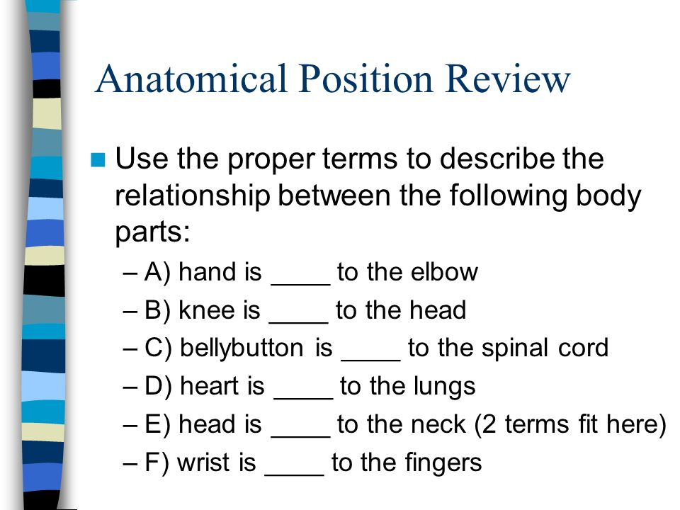 Anatomical Position Review