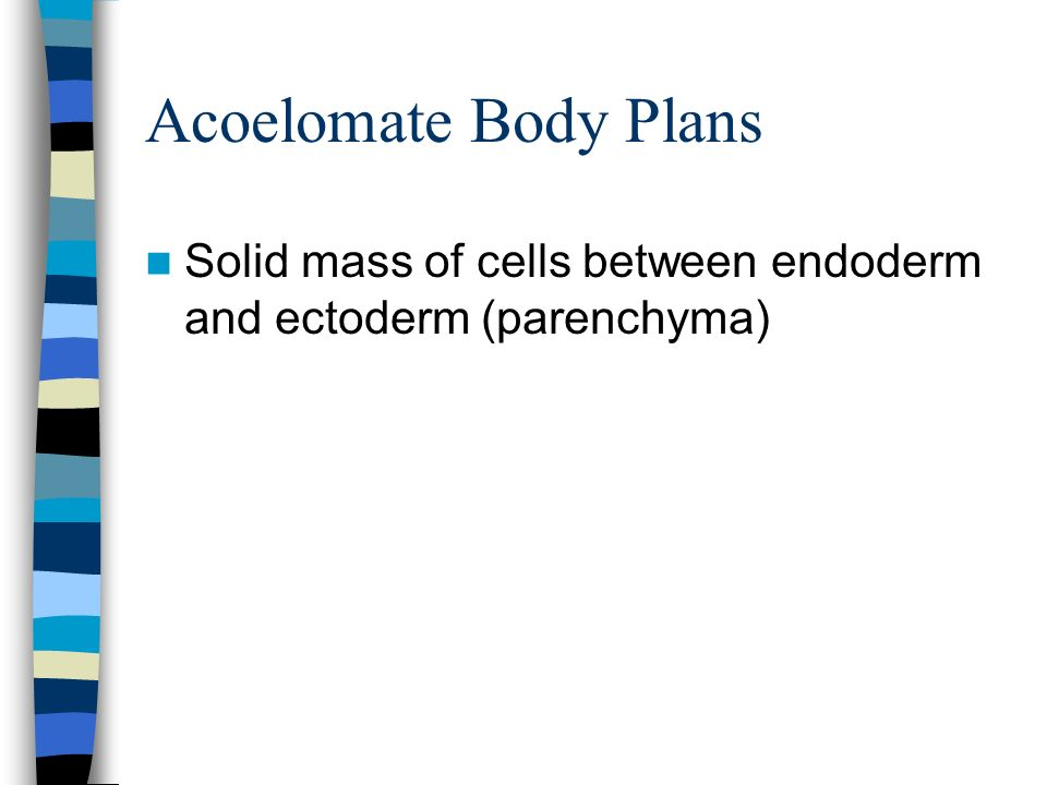 Acoelomate Body Plans Solid mass of cells between endoderm and ectoderm (parenchyma)
