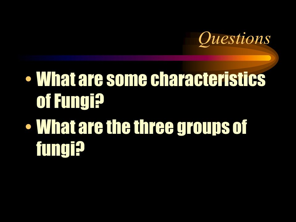 Questions What are some characteristics of Fungi What are the three groups of fungi