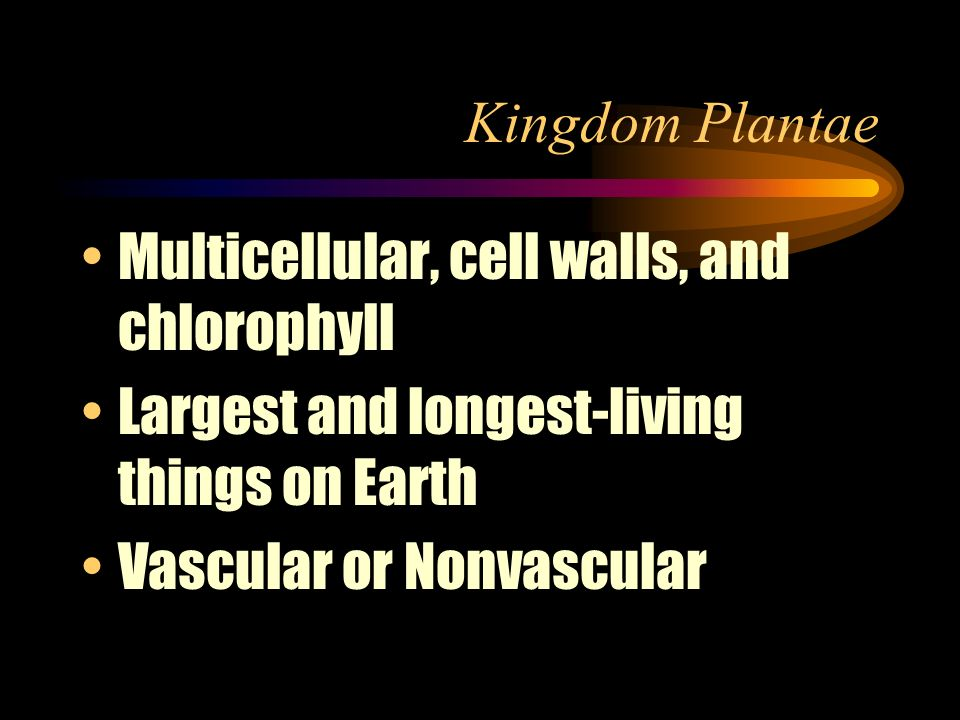 Kingdom Plantae Multicellular, cell walls, and chlorophyll. Largest and longest-living things on Earth.
