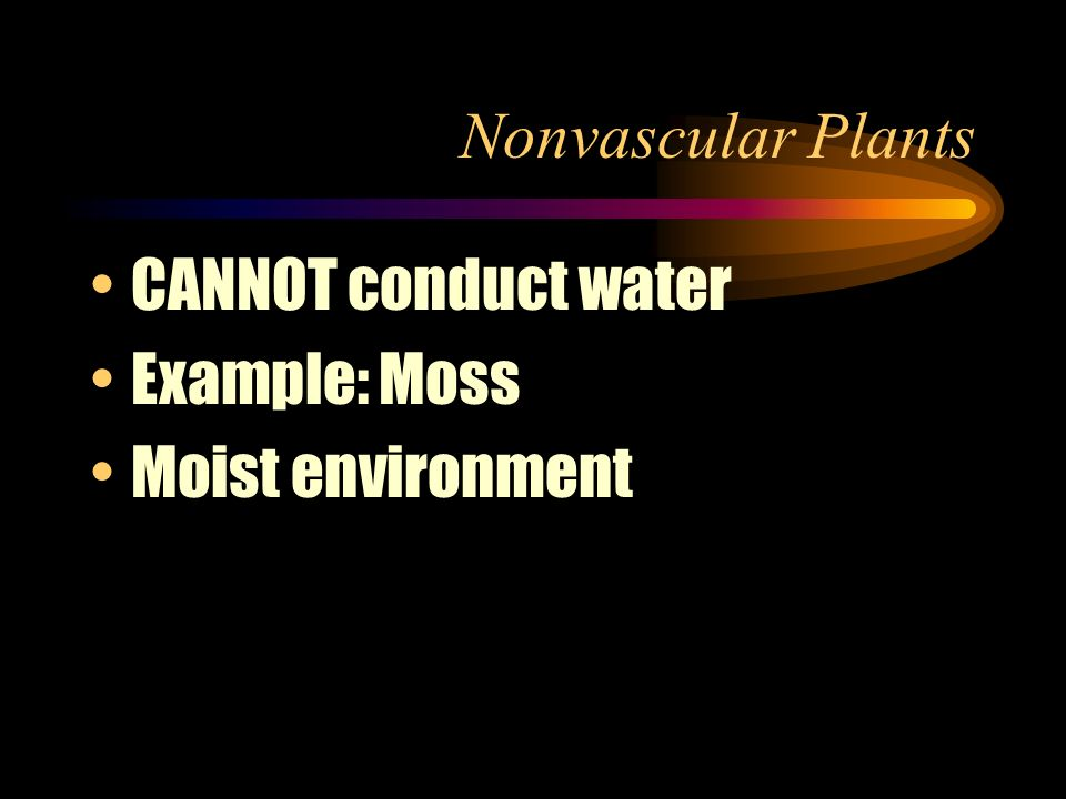 Nonvascular Plants CANNOT conduct water Example: Moss Moist environment