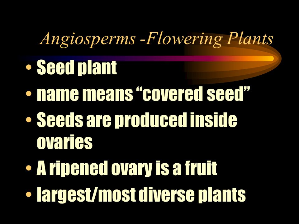 Angiosperms -Flowering Plants